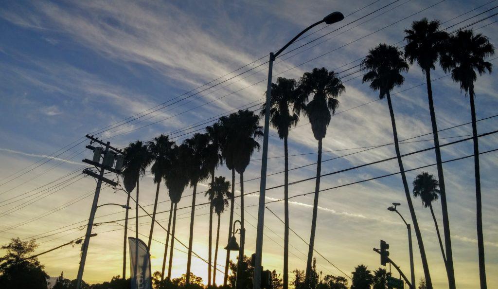 Fruitvale Avenue palm trees. Photo Credit: Kat Ferreira.