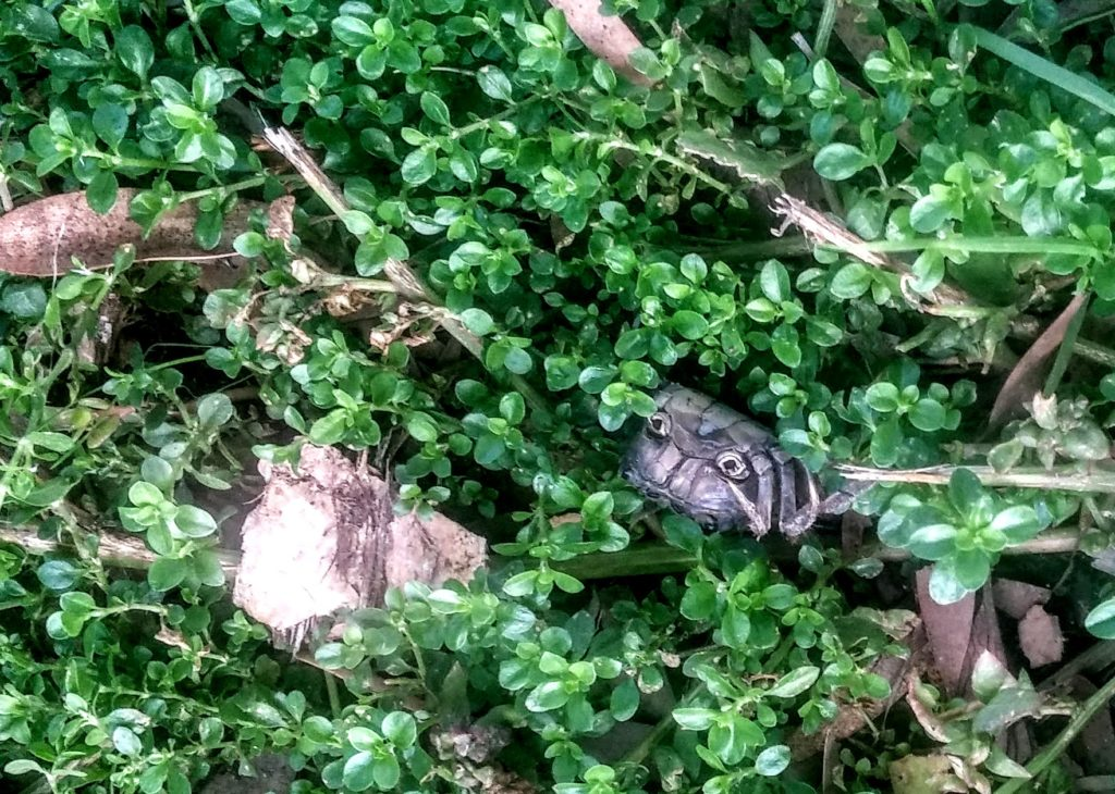 half-eaten crab near lake merritt channel