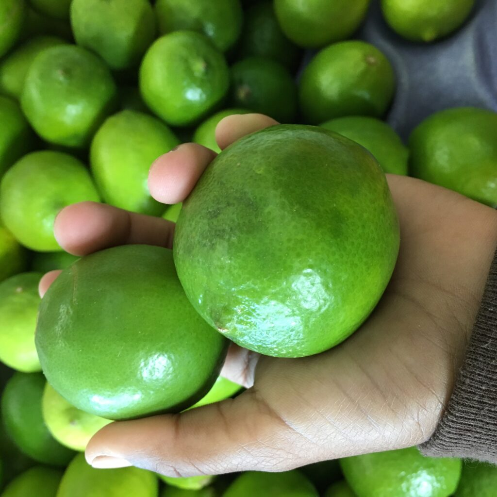A brown hand holds bright, beautiful green limes with bunches more in the background.